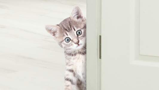 Is Your Cat Actually Satan? 9 Things To Look For