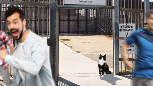Border Crisis Worsens As Biden's New Cat Stands At Gate To Mexico And Can't Decide Whether To Go In Or Out