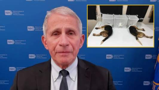 Fauci Says Attacking Puppy Torture Is An Attack On Science